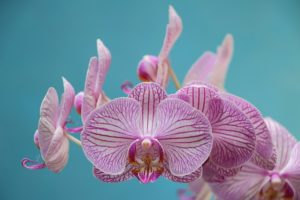 a purple orchid growing indoors